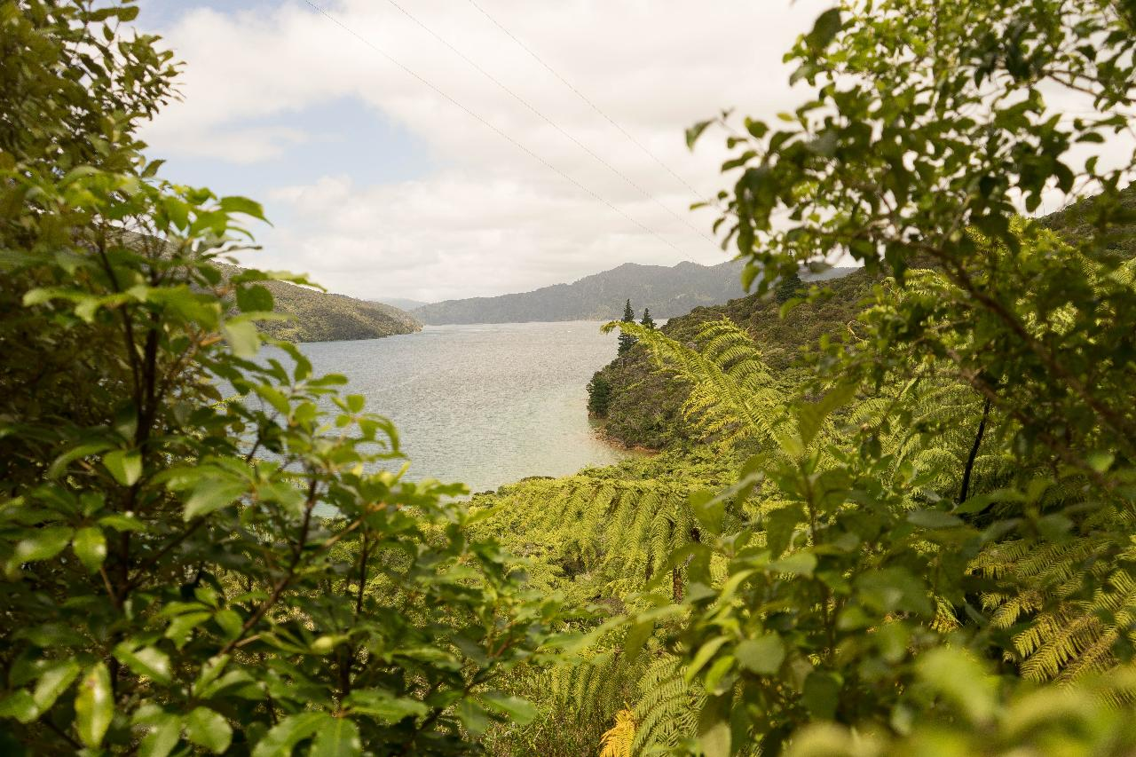Motuara Island and a Day in the Sounds
