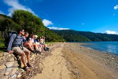 Torea Bay to Punga Cove Day Walk Special November 10th 2019