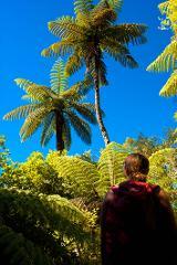 Motuara Island and One Day QCT Walk - Furneaux Lodge to Punga Cove