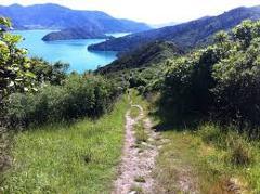 Mistletoe Bay to Anakiwa Day Walk