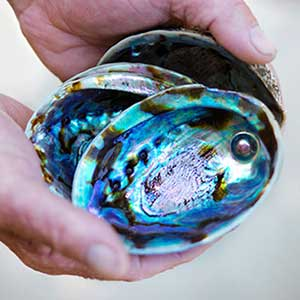 Paua Pearl Farm Tour