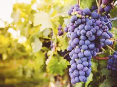 Wine & Gourmet Odyssey - Queenstown