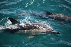 Full Day Dolphin Tour