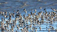 Audubon: Winter Birds Cruise