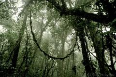 Monteverde Reserve Tour