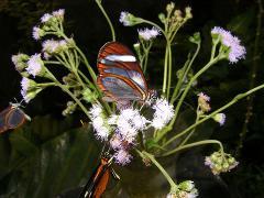 Butterfly Farm at Monteverde