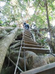 Original Canopy Tour at Monteverde