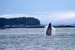 Whale Watching Tour - Only for Hotel Guest (20% off)