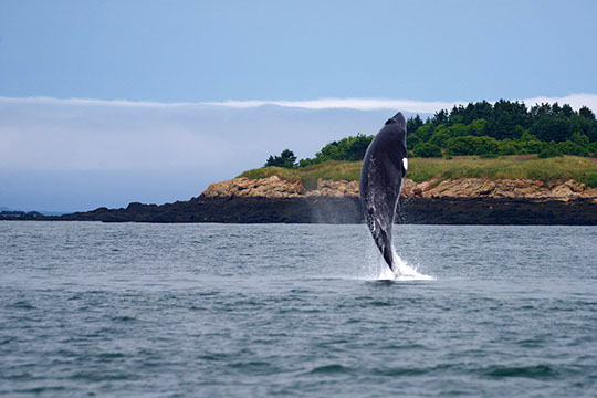 Whale Watching Tour - The Tarquin