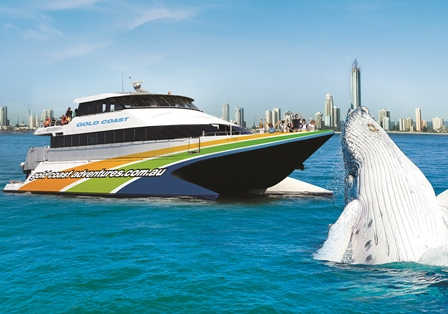 Whale Watching - Adults $99 & Kids $59