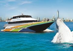 G&G Whale Watching - Adults $45 & Kids $35