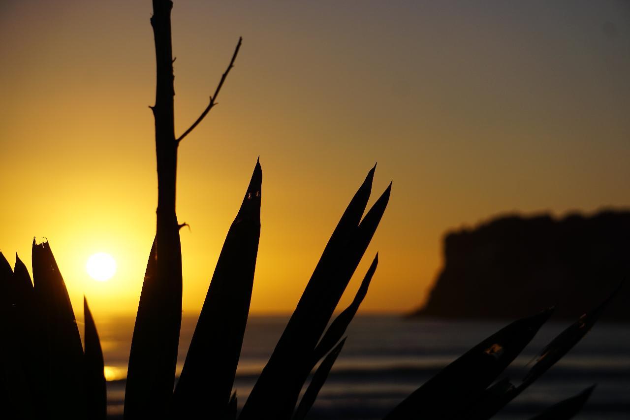 NZ SURF N YOGA