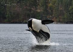 Parksville Half Day Whale & Wildlife Adventure