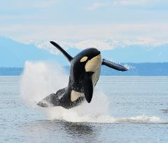 Full Day Whale Watch (8 Hour)