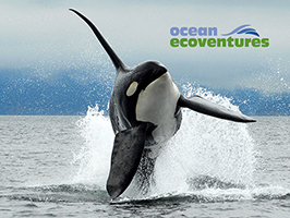 Whale Watching Eco Tour  3.5-4 Hours