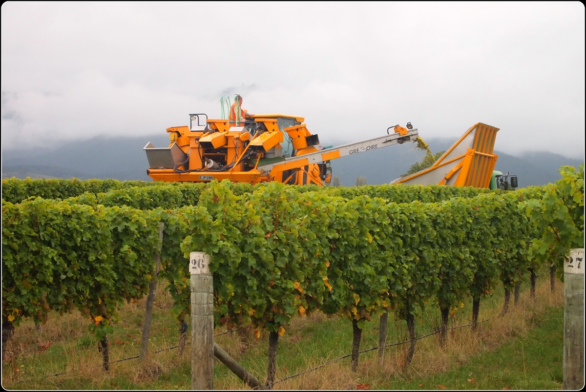 Full Day Wine Gourmet and Scenic Delights Tour from Picton P2