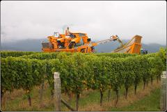 Full Day Wine Gourmet and Scenic Delights Tour from Picton