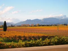 Winter Wine Gourmet and Scenic Pleasures of Marlborough: Group Tour