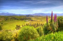 Full Day Wine Gourmet and Scenic Delights Tour from Blenheim P1