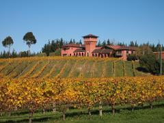 Private Tour: WINTER Wine and Scenic Tour from Picton Vehicle 1: 9 seats