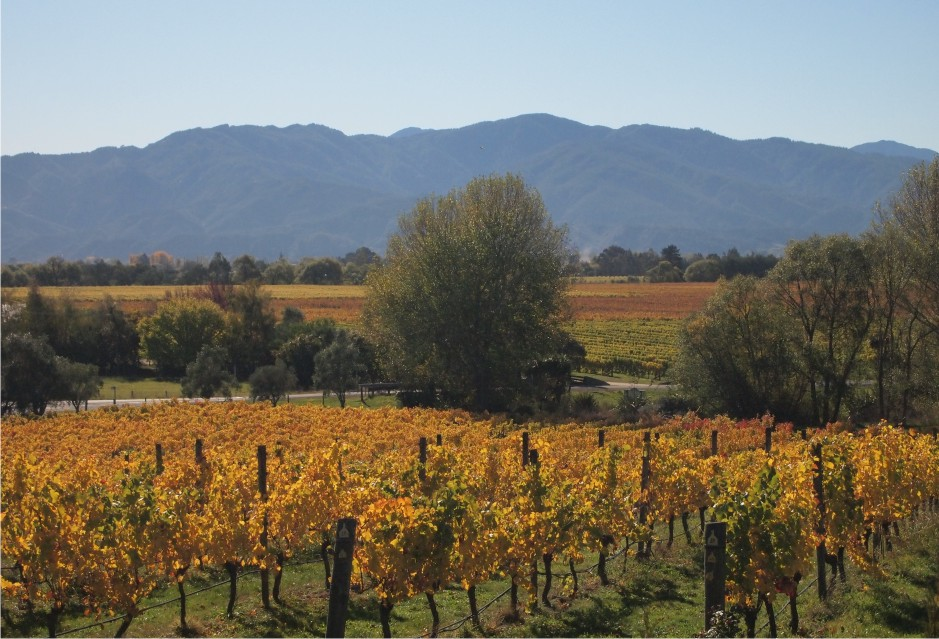 Half Day Wine Gourmet and Scenic Delights Tour from Blenheim