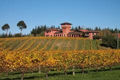 Private Tour: Winter Wine and Scenic Tour from Blenheim