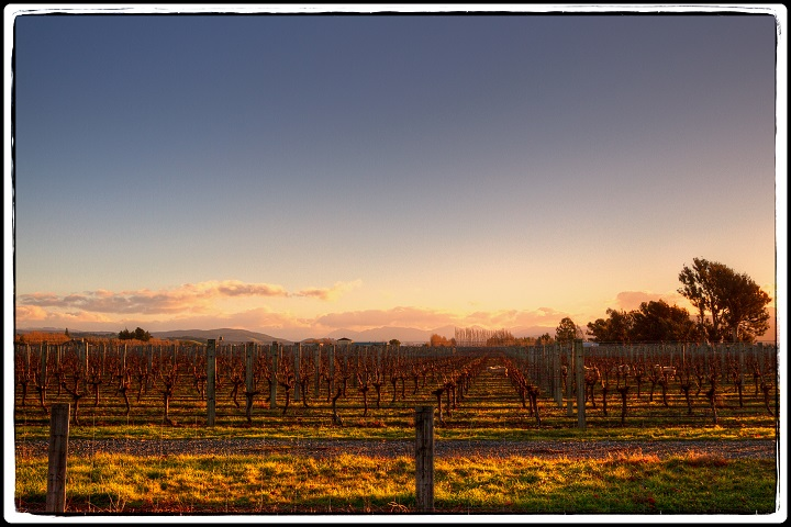 WINTER WINE DELIGHTS PRIVATE TOUR OF MARLBOROUGH: PLUS! Complimentary Wine