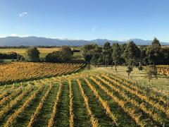 Winter Wine Gourmet and Scenic Pleasures of Marlborough: Group Tour