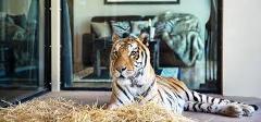 Canberra Floriade & Jamala Wildlife Lodge