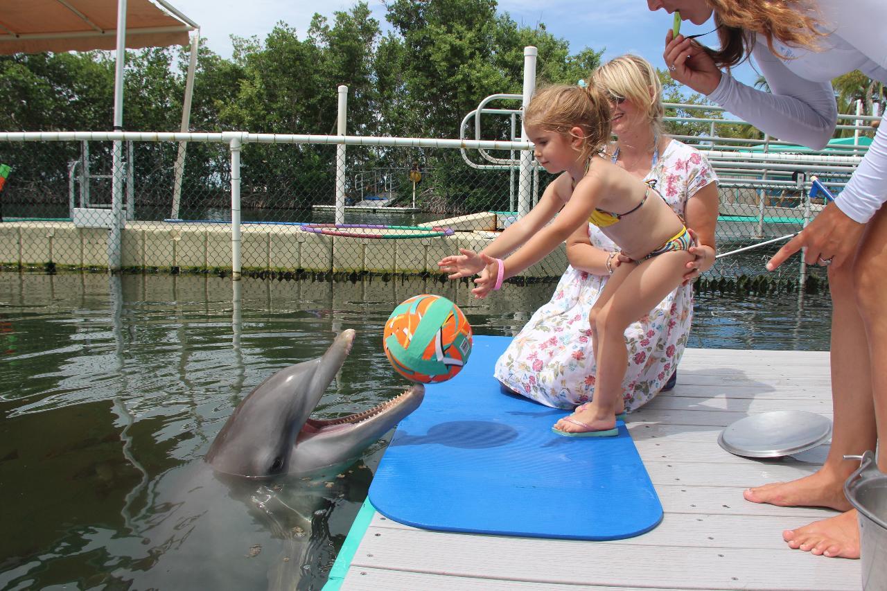 Dolphin Dockside