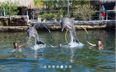 Special Needs/OMA Registration: Structured Swim With Dolphins
