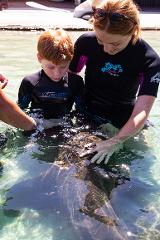 Book in a Gift Card: Zebra Shark Encounter Plus Admission Package