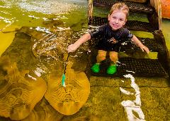 Mini Marine Biologist (7-11yr olds)