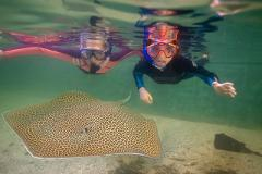 Adopt an Animal Coral Reef Package