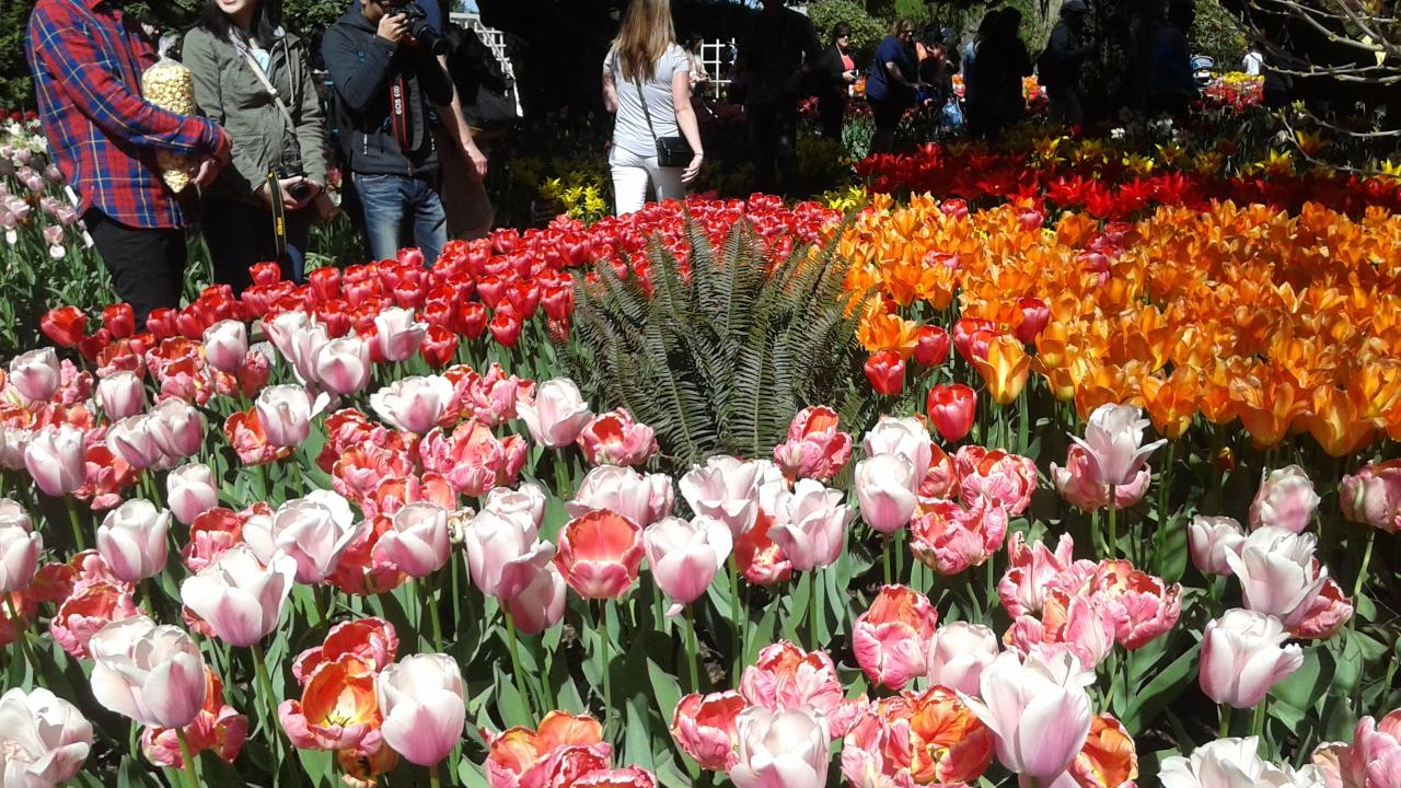 Tulips and Crab Cruise
