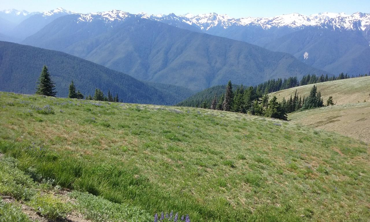 Hurricane Ridge Tour