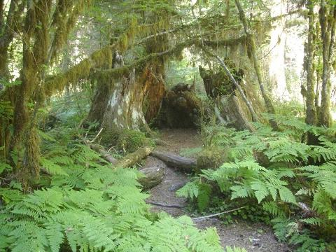 Private Olympic Peninsula and Forest Tour