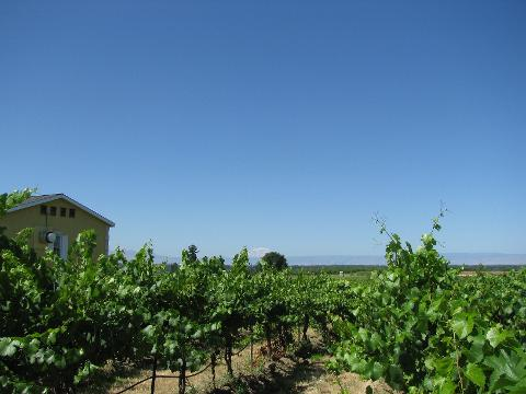 Vineyards and Wineries, Yakima Private Tour