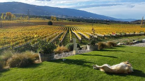 Winemakers Reserve