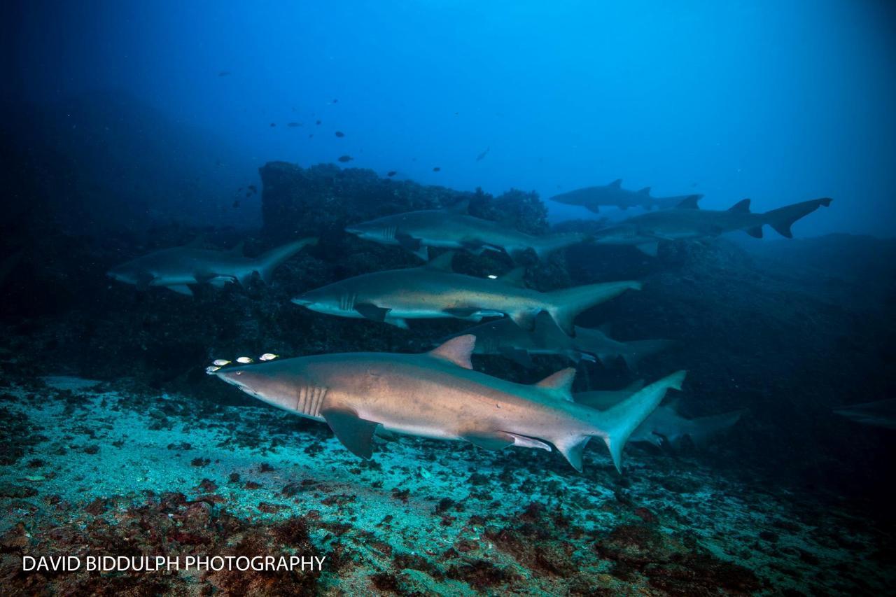 North Stradbroke Island Day Trip | Double Dive