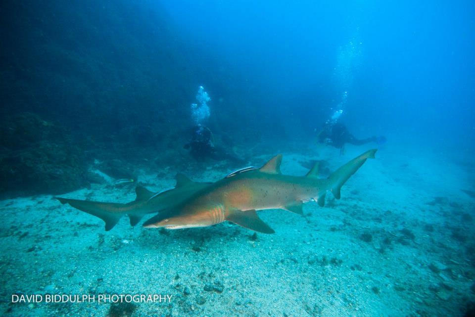 Shark Explorer Weekend   North Stradbroke Island
