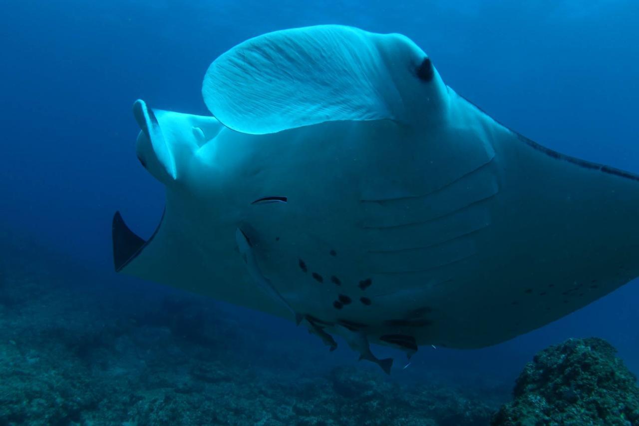 North Stradbroke Island Day Trip   Double Dive