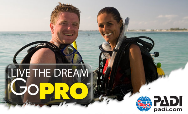 PADI Divemaster Course | Gold Coast