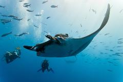 Manta Ray Explorer Weekend  | North Stradbroke Island