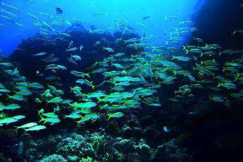 Byron Bay | Julian Rocks | Double Dive