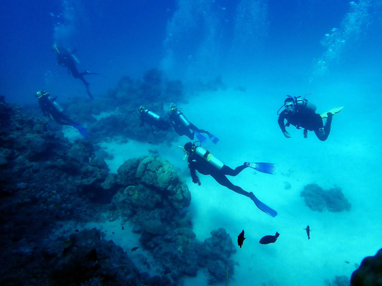 PADI Open Water Diver Course Gold Coast