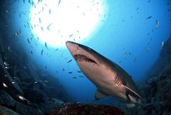 North Solitary Islands Weekend | 4 Dives | 2 Nights