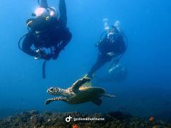 Wave Break Island - Single Dive