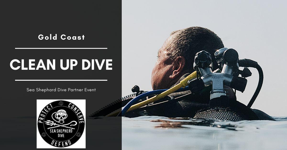Gold Coast Seaway Social Clean-up Dive & Fundraiser BBQ