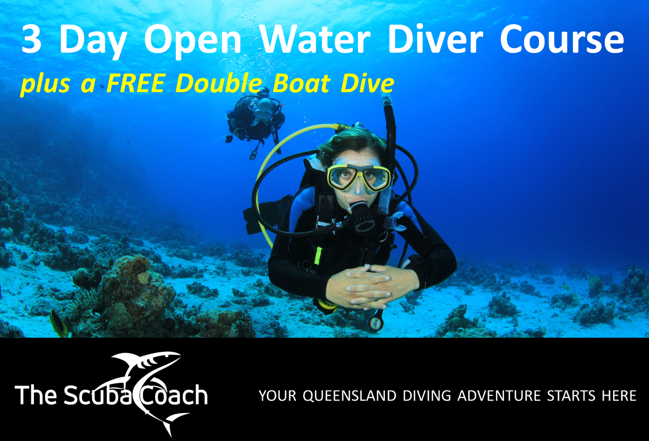 PADI Open Water Diver Course + FREE Double Dive | Gold Coast